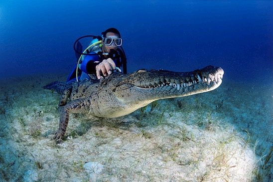 david_doubilet_underwater_photography_
