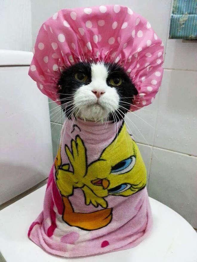 animals-taking-bath-32__605-L_jpg