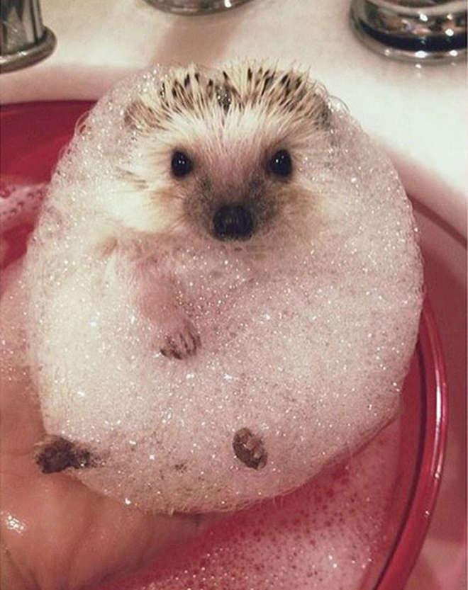 XX-animals-that-enjoys-taking-a-bath-2__605-L_jpg