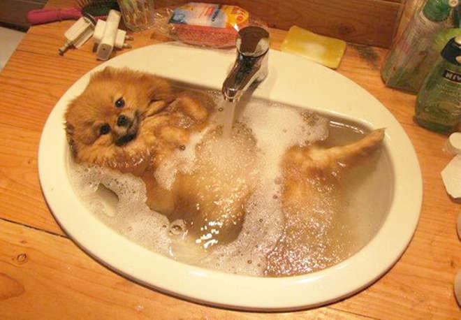 XX-animals-that-enjoys-taking-a-bath-5__605-L_jpg