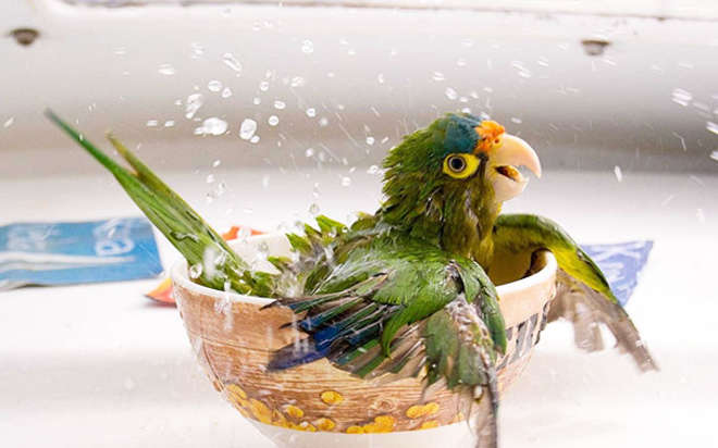 XX-animals-that-enjoys-taking-a-bath-6__605-L_jpg