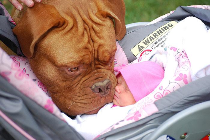 20-photos-adorables-qui-prouvent-que-vos-enfants-ont-besoin-dun-animal-de-compagnie16