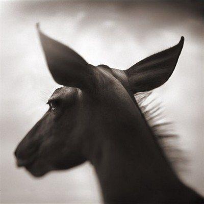 kudu-against-sky-laikipia-2003-nick-brandt